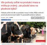 Článek - Vliv pohody zvířat na produkci masa a mléka je známý. Jak působí stres na plodnost býků?